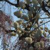 奈良から桜だより